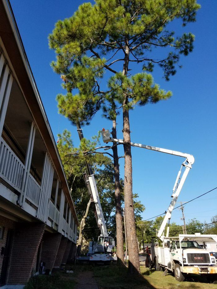 Tree Pruning in Zachary-Baton Rouge