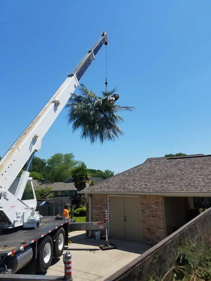 Tree Cutting & Removal in Zachary-Baton Rouge