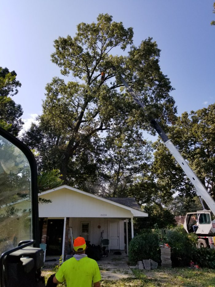 Tree Trimming in Zachary-Baton Rouge